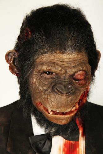 gallery monkey